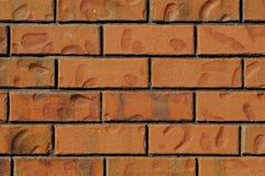 ceglanej czerwieni ściana Obraz Stock