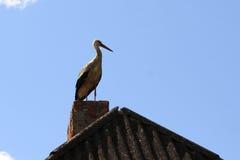 Cegonha branca bonita no telhado com chaminé do tijolo Fotos de Stock Royalty Free