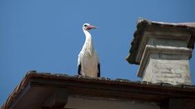 Cegonha branca no telhado Imagem de Stock