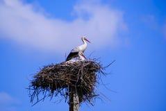 Cegonha dois branca com bico vermelho e as asas pretas que sentam-se em seu ninho Imagem de Stock Royalty Free