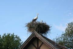Cegonha e bebês da mãe no ninho Imagem de Stock Royalty Free