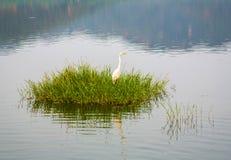 Cegonha na grama no lago Sagar do homem. Jaipur, Rajasthan, India. Imagem de Stock