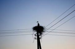 Cegonha no nascer do sol Imagem de Stock