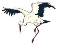 Cegonha pássaro Fotografia de Stock