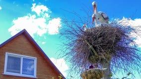 Cegonhas decorativas no ninho Fotos de Stock