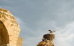 Cegonhas que cantam músicas para cumprimentar o nascer do sol Fotos de Stock Royalty Free