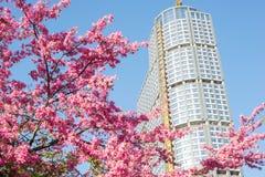 Ceiba speciosa Baum und Gebäude Stockbilder