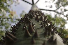 Ceiba tree. A marvelous Ceiba tree at Palenque, Chiapas Stock Photography