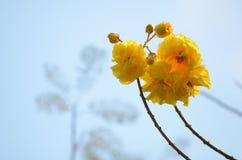 Ceibaspeciosa, de boom van de zijdezijde stock fotografie