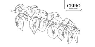 Ceibo filialuppsättning 2 stock illustrationer