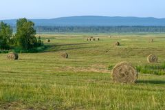 Ceifa, colhendo nos campos e nos montes Fotos de Stock Royalty Free