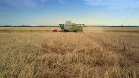 A ceifeira aérea da vista lateral recolhe o trigo maduro no campo video estoque