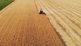 A ceifeira de liga da vista aérea recolhe a colheita do trigo Trigo que colhe tesouras Ligas na indústria alimentar do campo video estoque