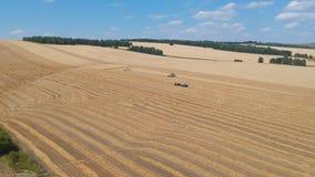 A ceifeira de liga da vista aérea recolhe o trigo em um grande campo filme
