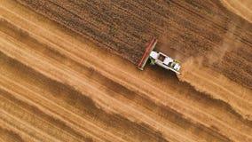 A ceifeira de liga moderna da definição da vista aérea 4k recolhe o trigo maduro que sae atrás de uma nuvem da poeira em um campo video estoque