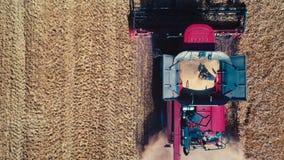 Ceifeira de liga na ação no campo de trigo, descarregando grões, opinião aérea do zangão filme