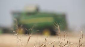 Ceifeira de liga no campo de trigo, ceifeira verde que trabalham no campo, vista nas ligas e tratores que trabalham sobre video estoque