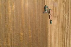 Ceifeira de liga que colhe o trigo dourado Imagens de Stock