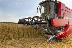 Ceifeira de liga que colhe o trigo Grão que colhe a liga Trigo da colheita mecanizada Fotos de Stock Royalty Free