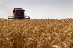 Ceifeira de liga que colhe o trigo Grão que colhe a liga Trigo da colheita mecanizada foto de stock royalty free