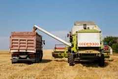 Ceifeira de liga que descarrega a grão do trigo no reboque dos caminhões em um dia de verão brilhante Fotos de Stock Royalty Free