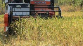 Ceifeira de liga que trabalha no campo do arroz. video estoque