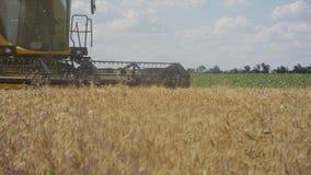 A ceifeira de liga recolhe a colheita do trigo Trigo que colhe tesouras Ligas no campo tiro do steadicam Ind?stria alimentar filme