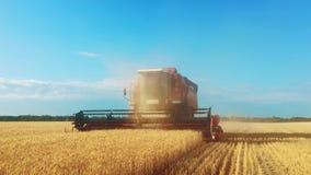 A ceifeira de liga recolhe a colheita do trigo Trigo que colhe tesouras Ligas no conceito da indústria alimentar do campo video estoque