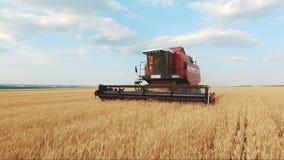 A ceifeira de liga recolhe a colheita do trigo Trigo que colhe tesouras Ligas no conceito da ind?stria alimentar do campo vídeos de arquivo