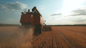 A ceifeira de liga recolhe a colheita do trigo Trigo que colhe tesouras Ligas no conceito da ind?stria alimentar do campo video estoque