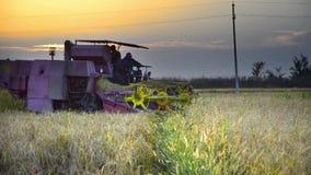 A ceifeira de liga recolhe o vídeo do estoque da colheita do trigo filme
