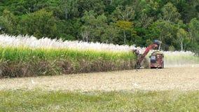 Ceifeira e caminhão do cana-de-açúcar video estoque