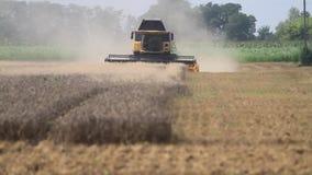 A ceifeira e o caminhão de liga recolhem uma colheita nova do trigo vídeos de arquivo
