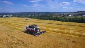 A ceifeira moderna do trator da liga do velhice da colheita colhe colheitas no campo, órbita aérea da mosca filme