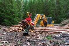 Ceifeira na madeira preliminar da floresta que processa, ramos de poda do trator da máquina do Woodworking deforestation foto de stock