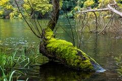 Ceira river, Penacova, Portugal Stock Photography