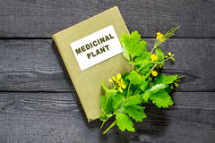 Celandine and directory medicinal plant Royalty Free Stock Photography