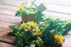 Celandine herb Royalty Free Stock Photography