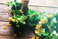 Celandine herbal Stock Photo