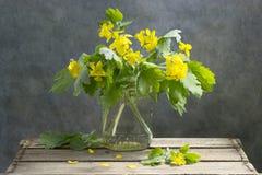 Celandine Royalty Free Stock Photos