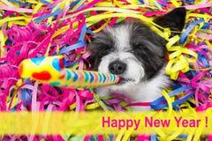 Celberation del perro de la Feliz Año Nuevo Imagen de archivo libre de regalías