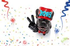Celberation del perro de la Feliz Año Nuevo Fotografía de archivo
