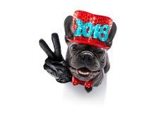Celberation del perro de la Feliz Año Nuevo Imágenes de archivo libres de regalías
