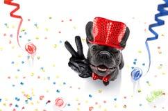 Celberation del perro de la Feliz Año Nuevo Fotografía de archivo libre de regalías