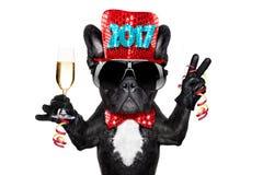 Celberation del perro de la Feliz Año Nuevo Foto de archivo libre de regalías