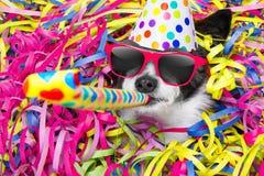 Celberation del perro del feliz cumpleaños Fotos de archivo