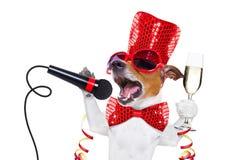 Celberation do cão do ano novo feliz Fotografia de Stock Royalty Free