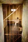 Celda de prisión Imagen de archivo