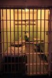 Celda de prisión de Alcatraz Fotos de archivo libres de regalías