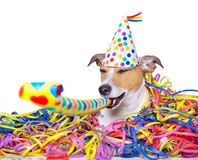 Celeberation de chien de bonne année Image libre de droits